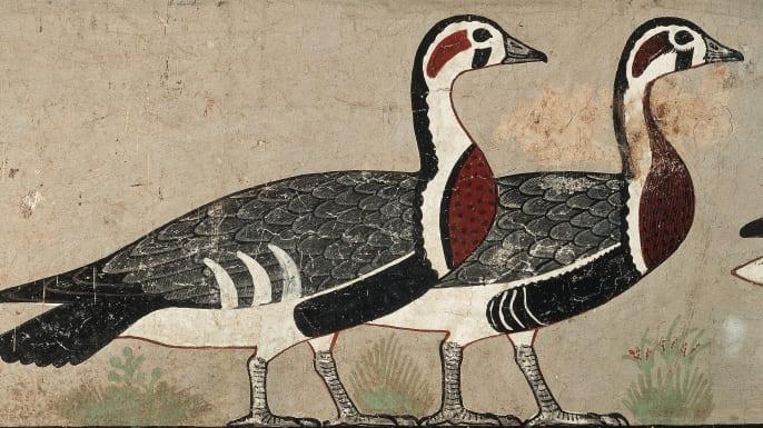 hith-meidum-geese-122316358-E